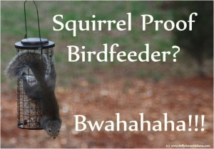 Squirrel Proof Bird Feeder by Sherry Snider